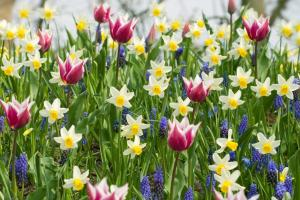 Plant Bed Spring Bulbs