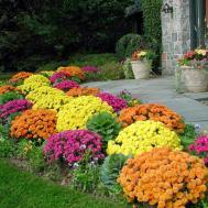 Planting Flowers Fall Winter