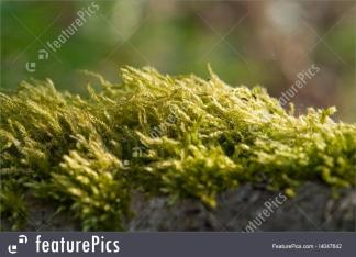 Plants Moss Detail Stock I Featurepics