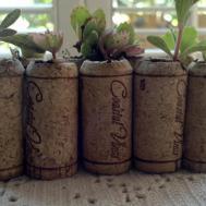 Sale Priced 100 Living Wedding Favors Live Succulent Wine Cork