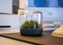 Sanctuary Little Mossarium Brings Slice Natural