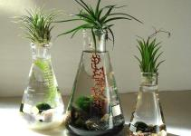 Science Set Marimo Balls Air Plants Beaker Flasks Zen Pet