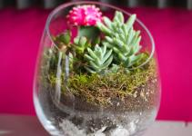 Sideways Diy Succulent Terrarium Kit Juicykits