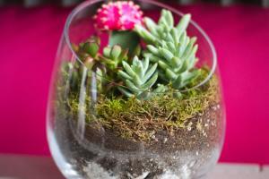 Sideways Diy Succulent Terrarium Kit Juicykits