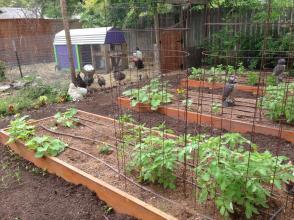 Spike Speaks Save Hausbar Farm All Austin Urban Farms