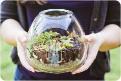Spring Diy Terrarium Ideas Always Trend