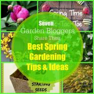 Spring Gardening New House Home