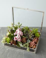 Succulent Jewelry Box Diy