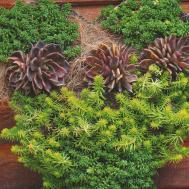 Succulent Wall Art Eden Garden Centre