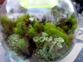 Terrarium Kit Diy Large Moss Lichen Featured 2015