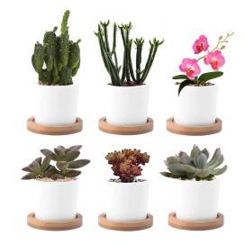 Tiny Glazed White Ceramic Craft Succulent Plant Round