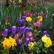 Tips Better Spring Flower Garden