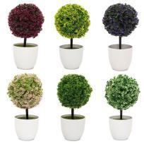 Top Small Topiary Plants Boxwood Ball