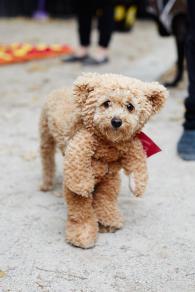 Top Tips Halloween Dogs Retriever Dog Blog