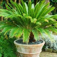 Tropical Style Garden