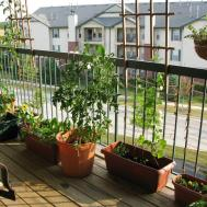 Urban Oasis Balcony Gardens Prove Green Always