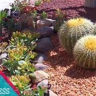 Very Easy Diy Attractive Succulent Garden