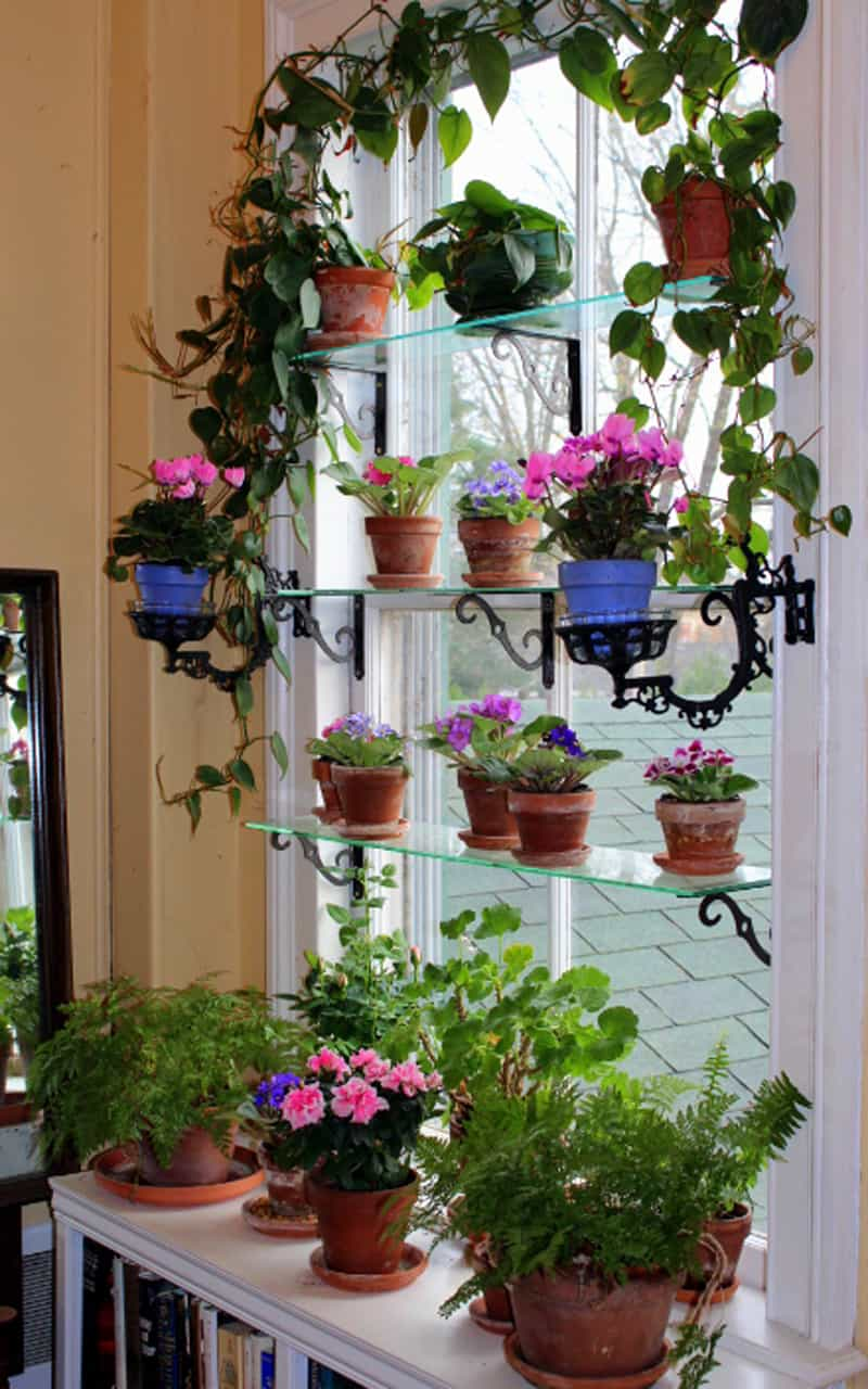 Shelving Indoor Plants