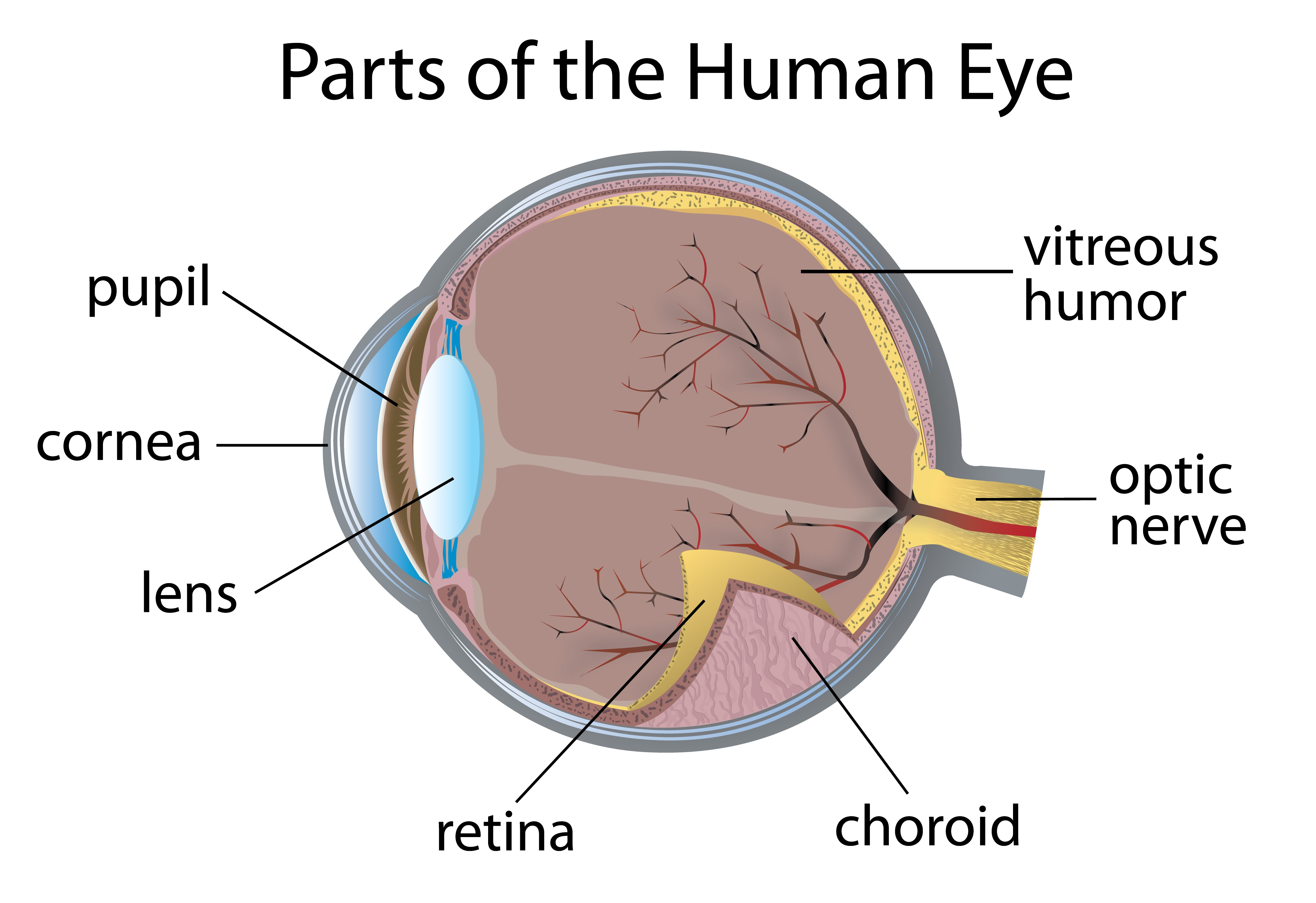 Drug Approved To Treat Diabetic Retinopathy In Those With