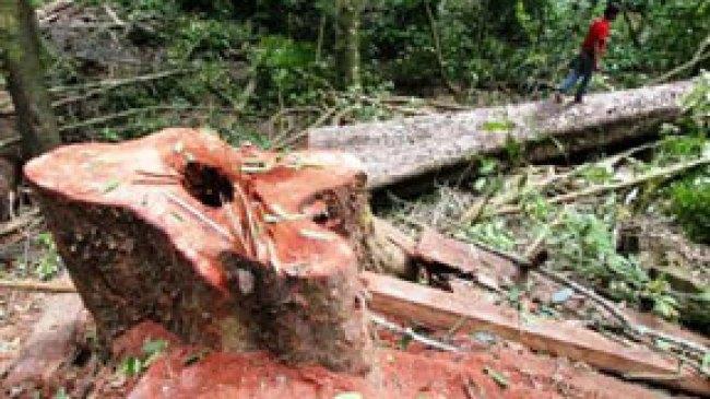 Faktor penyebab kerusakan hutan dan Pencegahannya