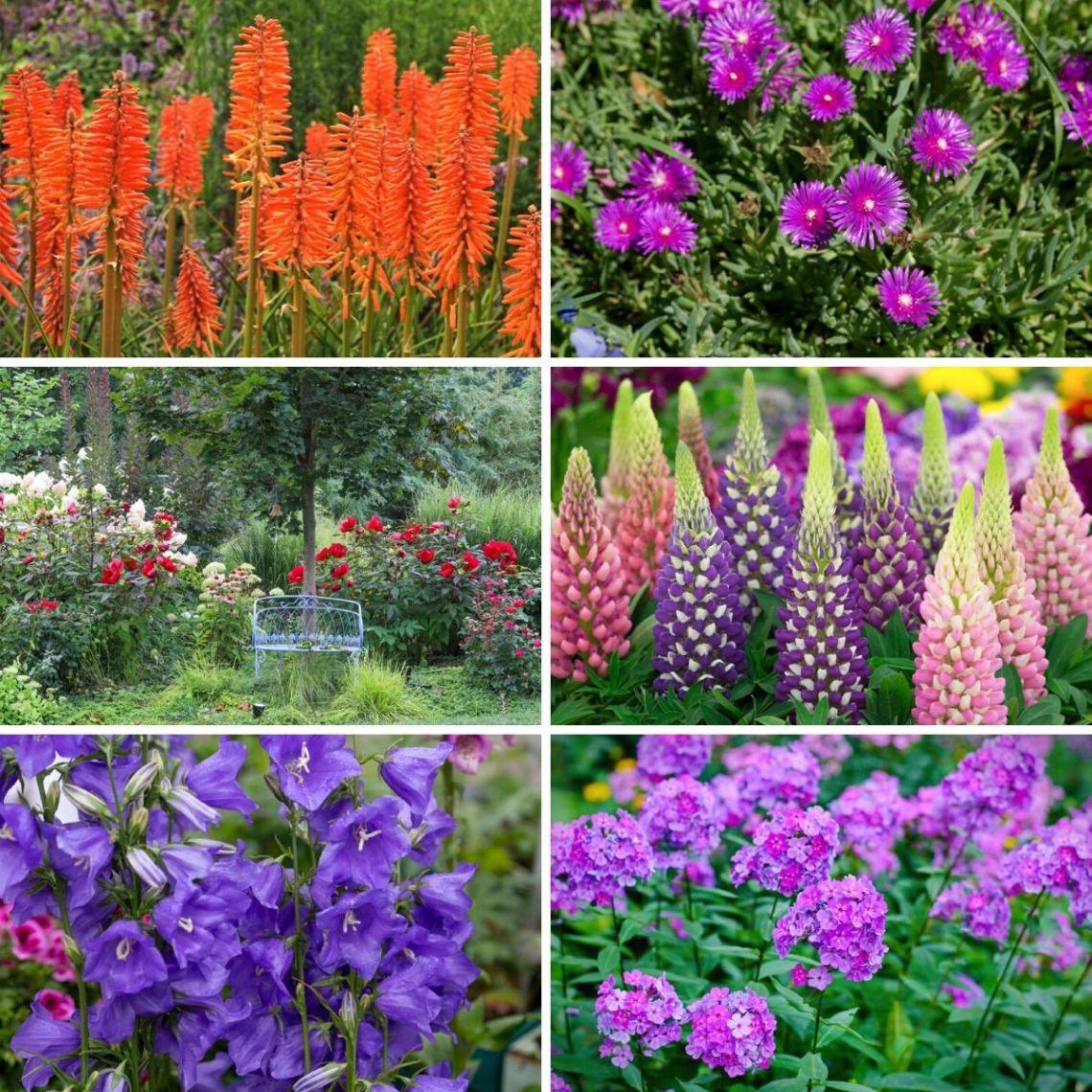 20 Luminous Perennial Flowers That Bloom All Season Diy Crafts