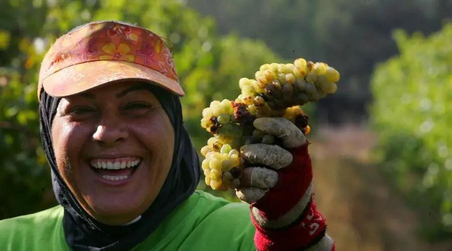 امرأة مصرية تقطف العنب
