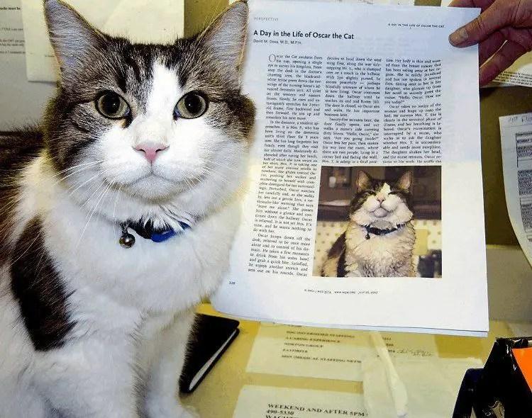 القط أوسكار