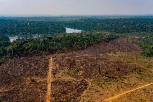 Enquanto o mundo sofre pela pandemia, desmatamento na Amazônia ...