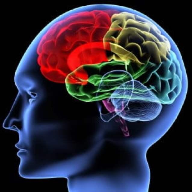 Sinestezide, insanların duyuları karmakarışıktır.