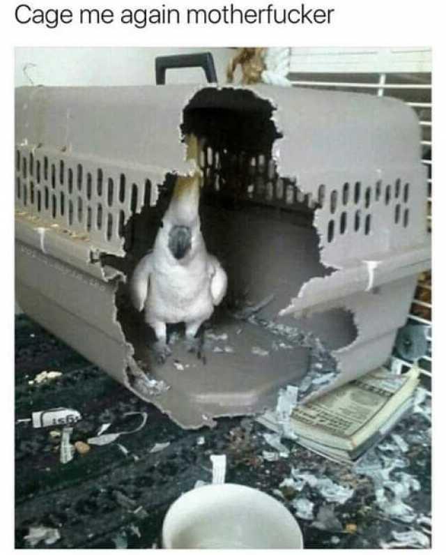 Me Cage Meme By Jchuang320 Memedroid