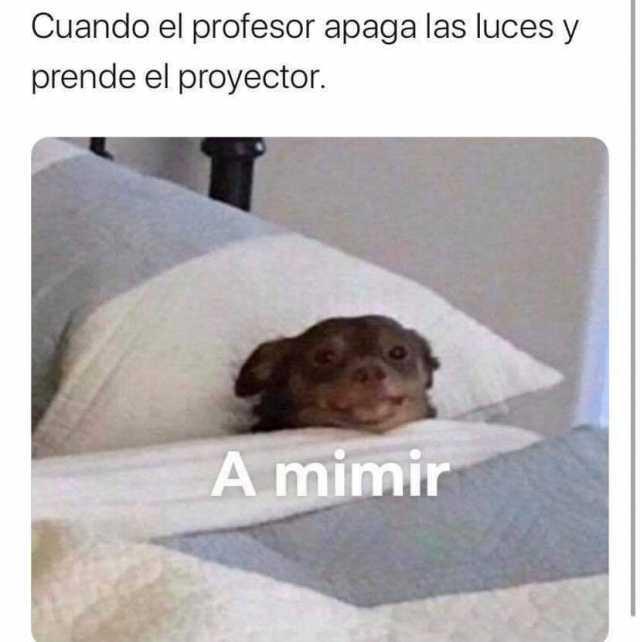 Dopl3r Com Memes Cuando El Profesor Apaga Las Luces Y Prende