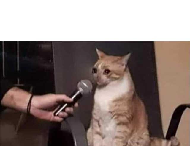 Dopl3r Com Memes Gato Llorando Mientras Una Mano Pone Cerca Un