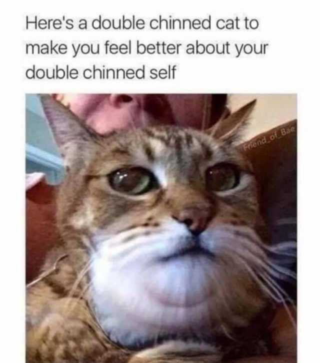 Joke4fun Memes How I Feel About Salad