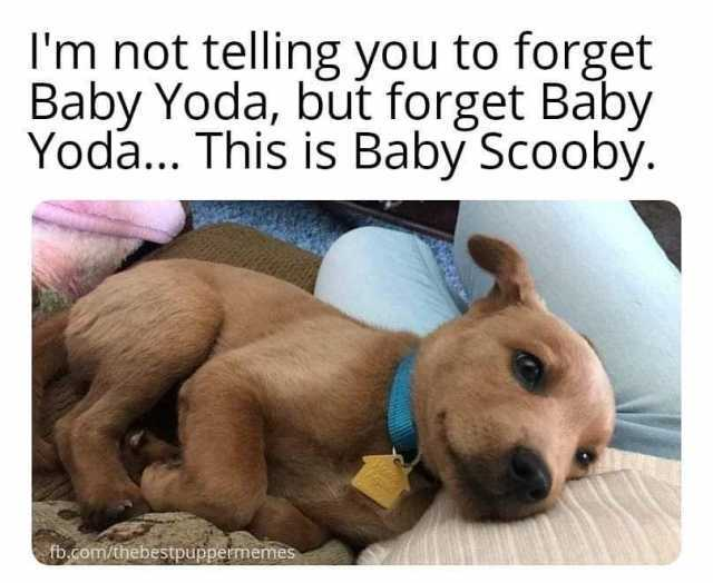 27 Baby Yoda Memes To Help Keep You Away From The Dark Side