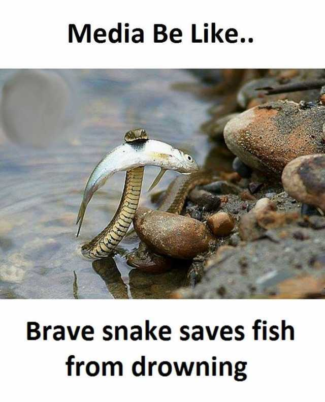 Dopl3r Com Memes Media Be Like Brave Snake Saves Fish From