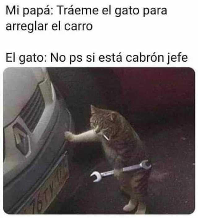 Dopl3r Com Memes Mi Papa Traeme El Gato Para Arreglar El Carro