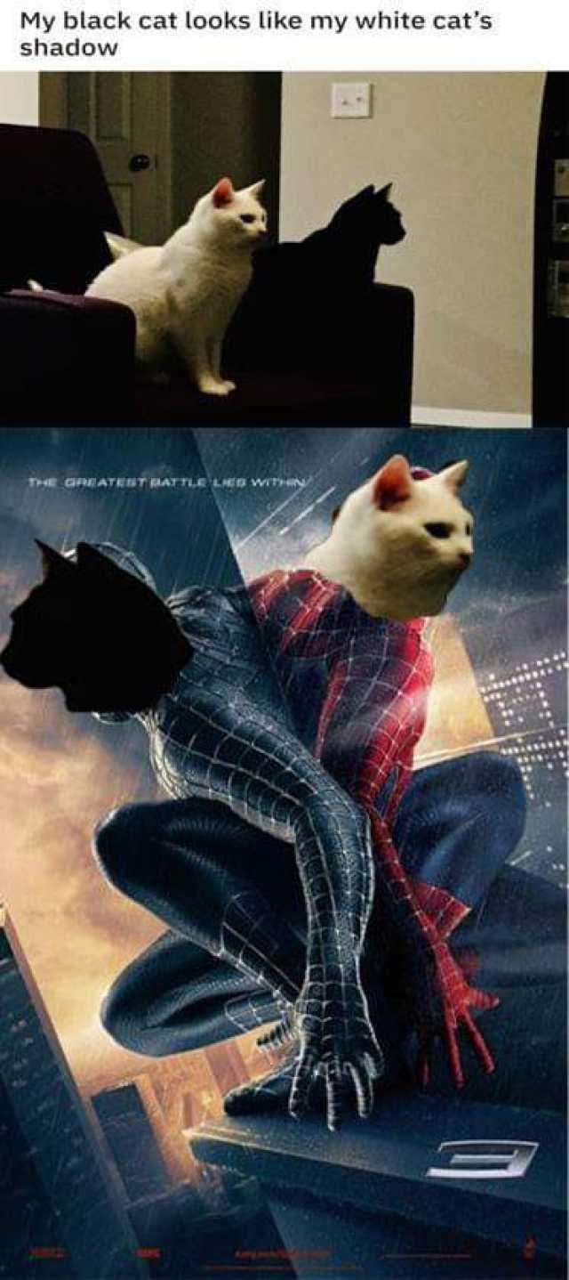 Dopl3r Com Memes My Black Cat Looks Like My White Cats Shadow
