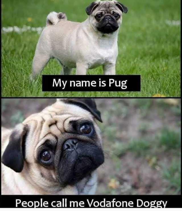 Dopl3r Com Memes My Name Is Pug People Call Me Vodafone Do