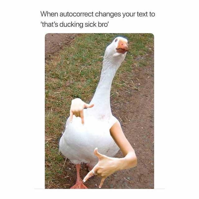 Ducking Autocorrect Imgflip