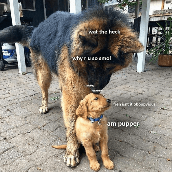 Get Those Jellybean Paws Ready For These 32 Hot Doggo Memes