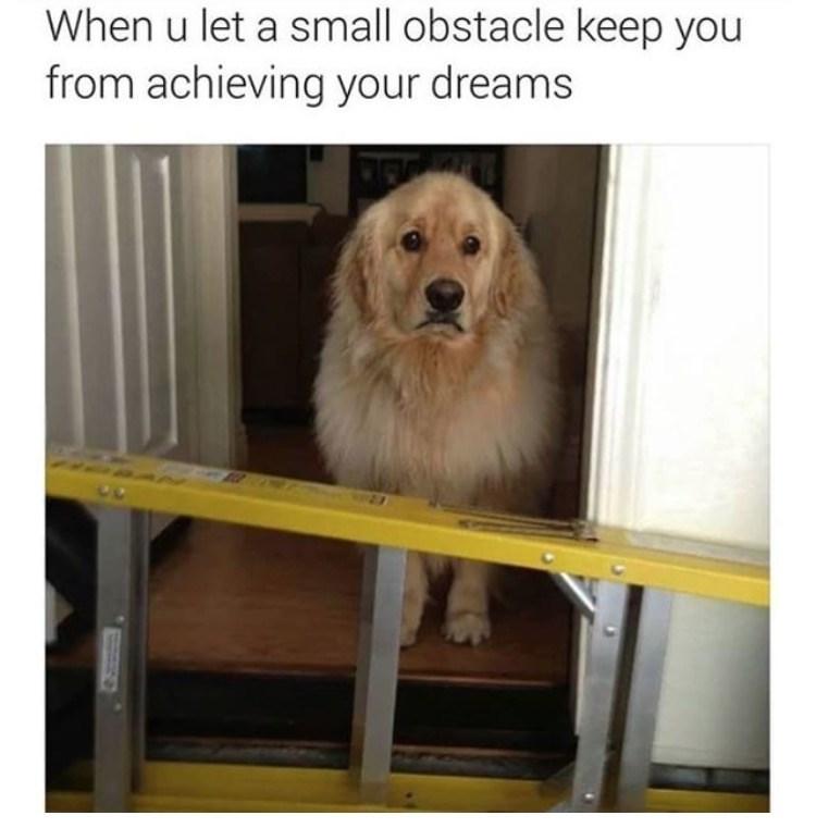 17 Dog Memes To Make You Laugh Pinstapals