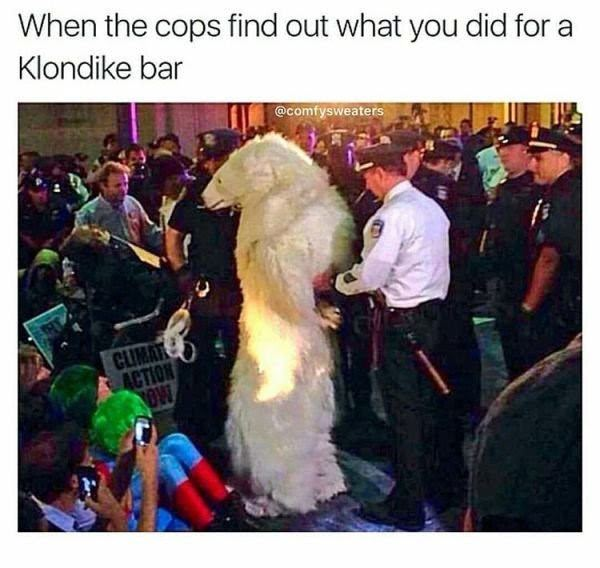 damn bear