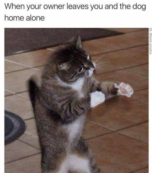 I Feel Fine Cat Bath Make A Meme