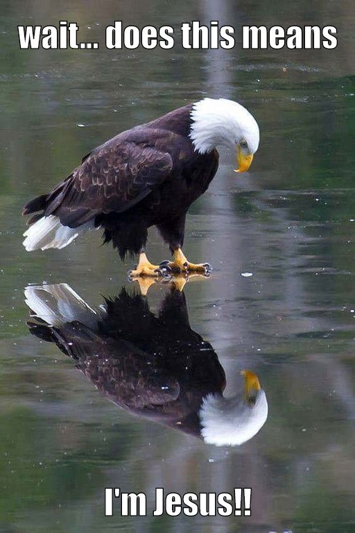 Eagle Walking On Water Picture