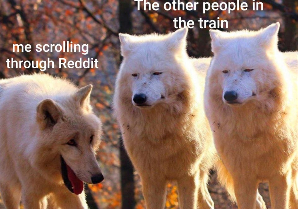 Laughing Wolves Meme Is Newest Funny Animal Meme Funny Gallery