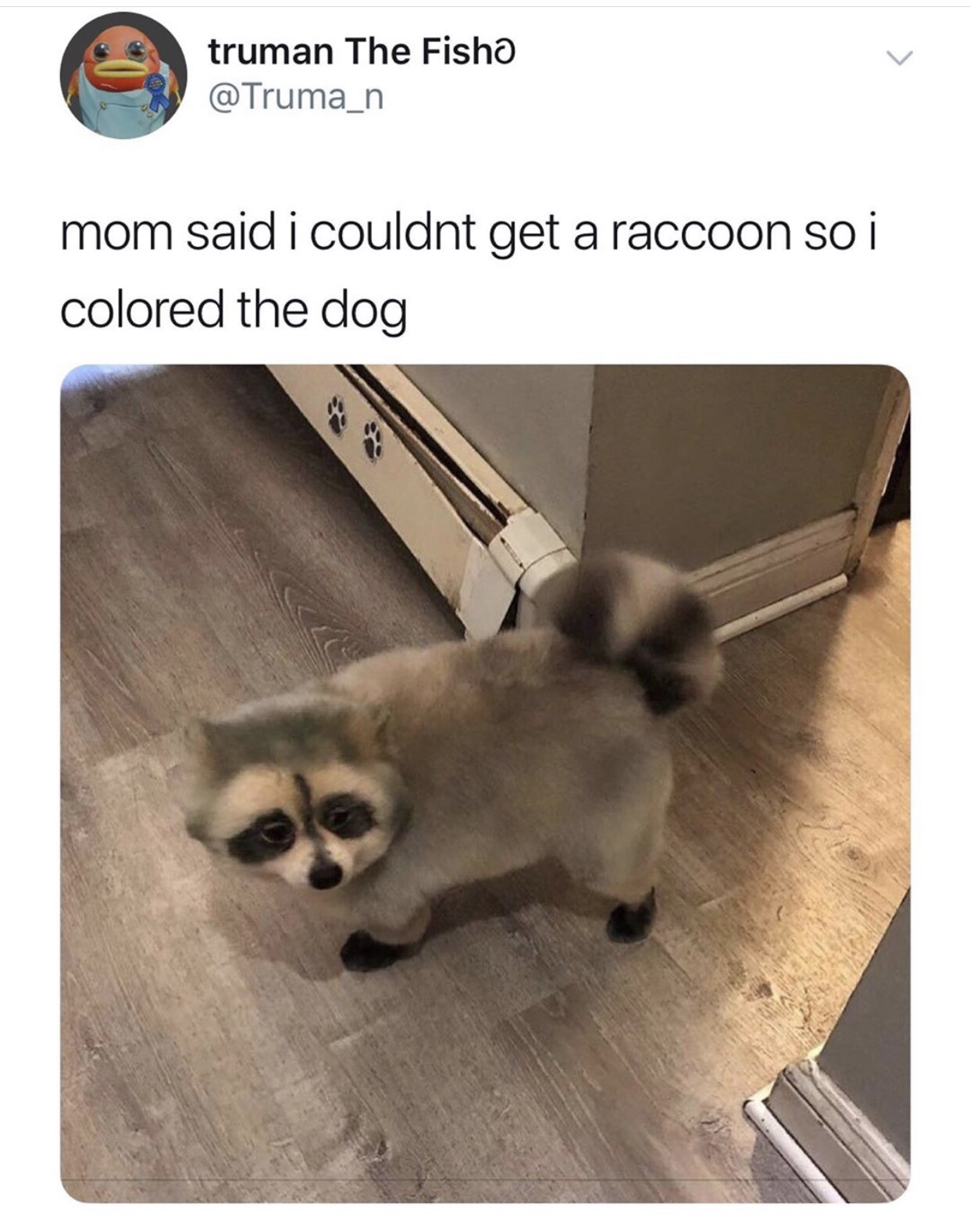 21 Raccoon Memes That Will Steal Your Weekend Gallery