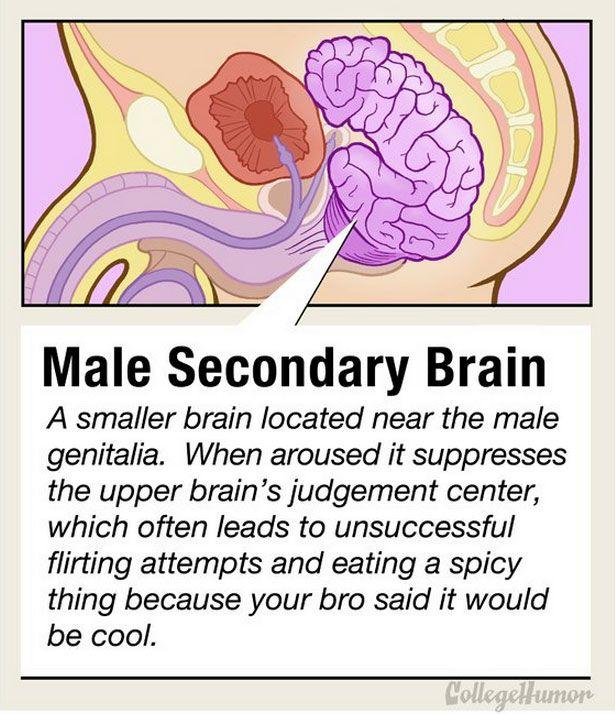 bro brain
