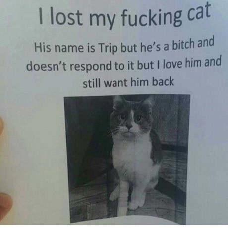 fucking cat