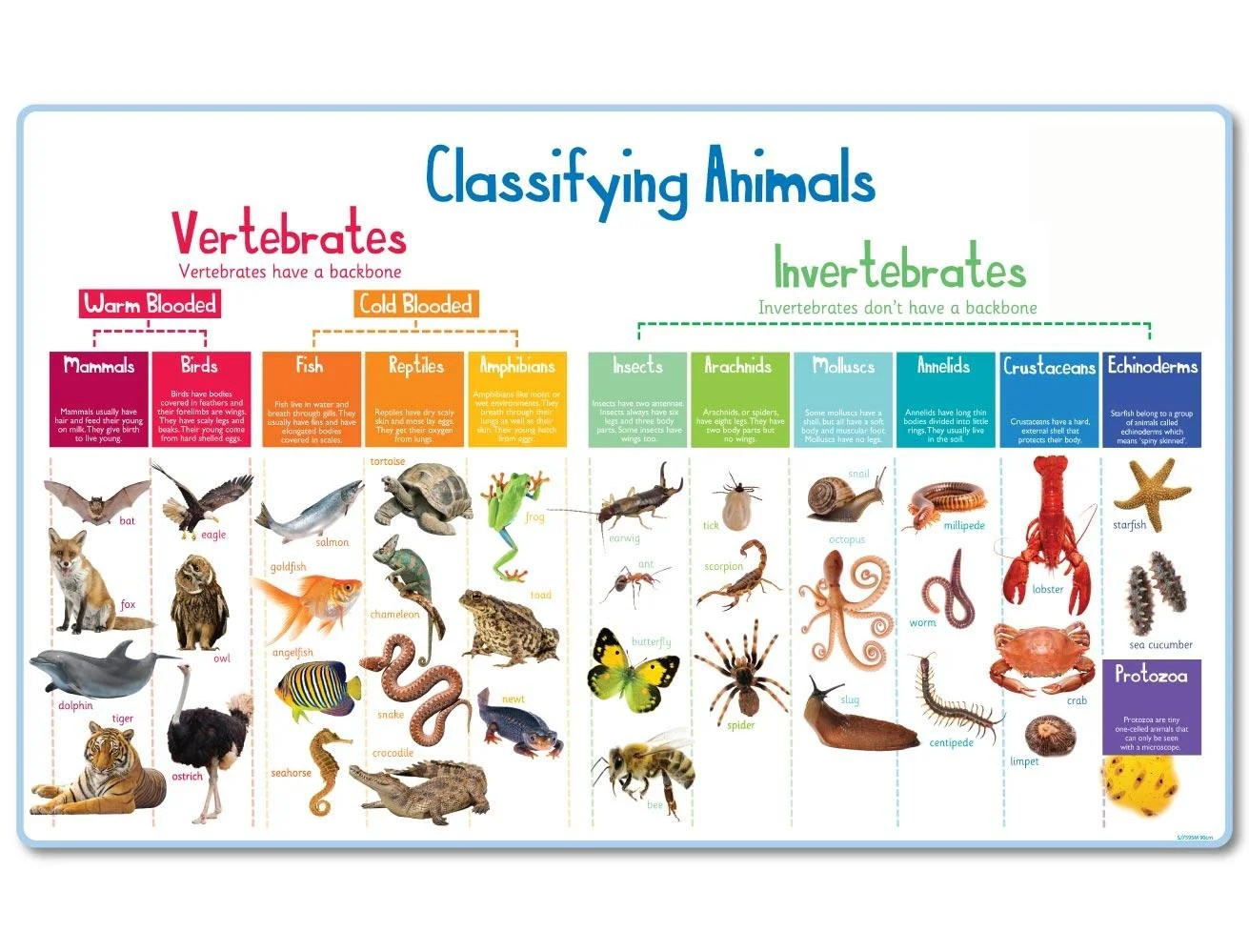 Animal Classification Mural