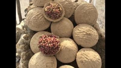 Afghani Gangina Method To Preserve Fruits And Veggies